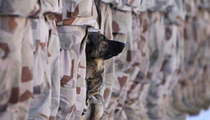 Military working dogs serving in the toughest conditions keeping their units safe