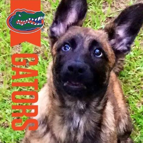 PSD Kennels puppy buyer review of Our girl