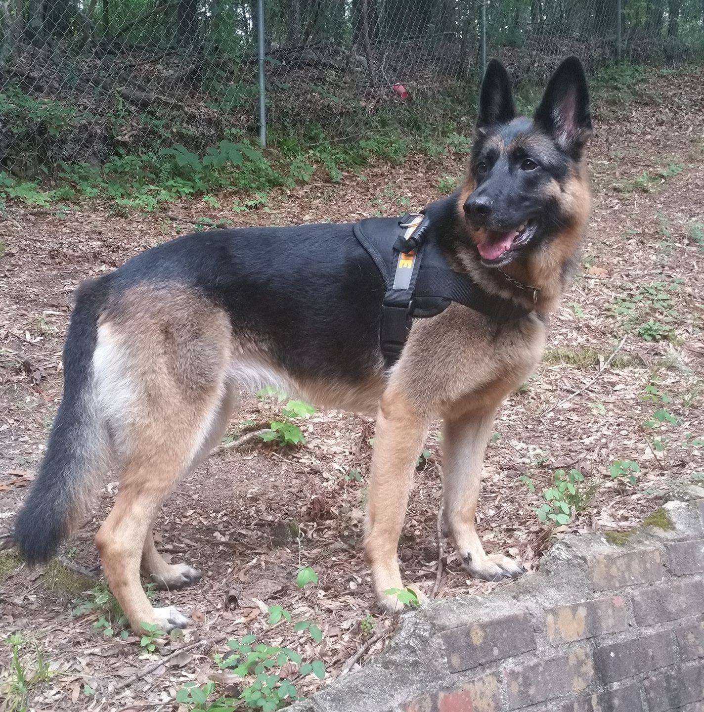 dog training review of PSD Kennels in Poplarville Ms
