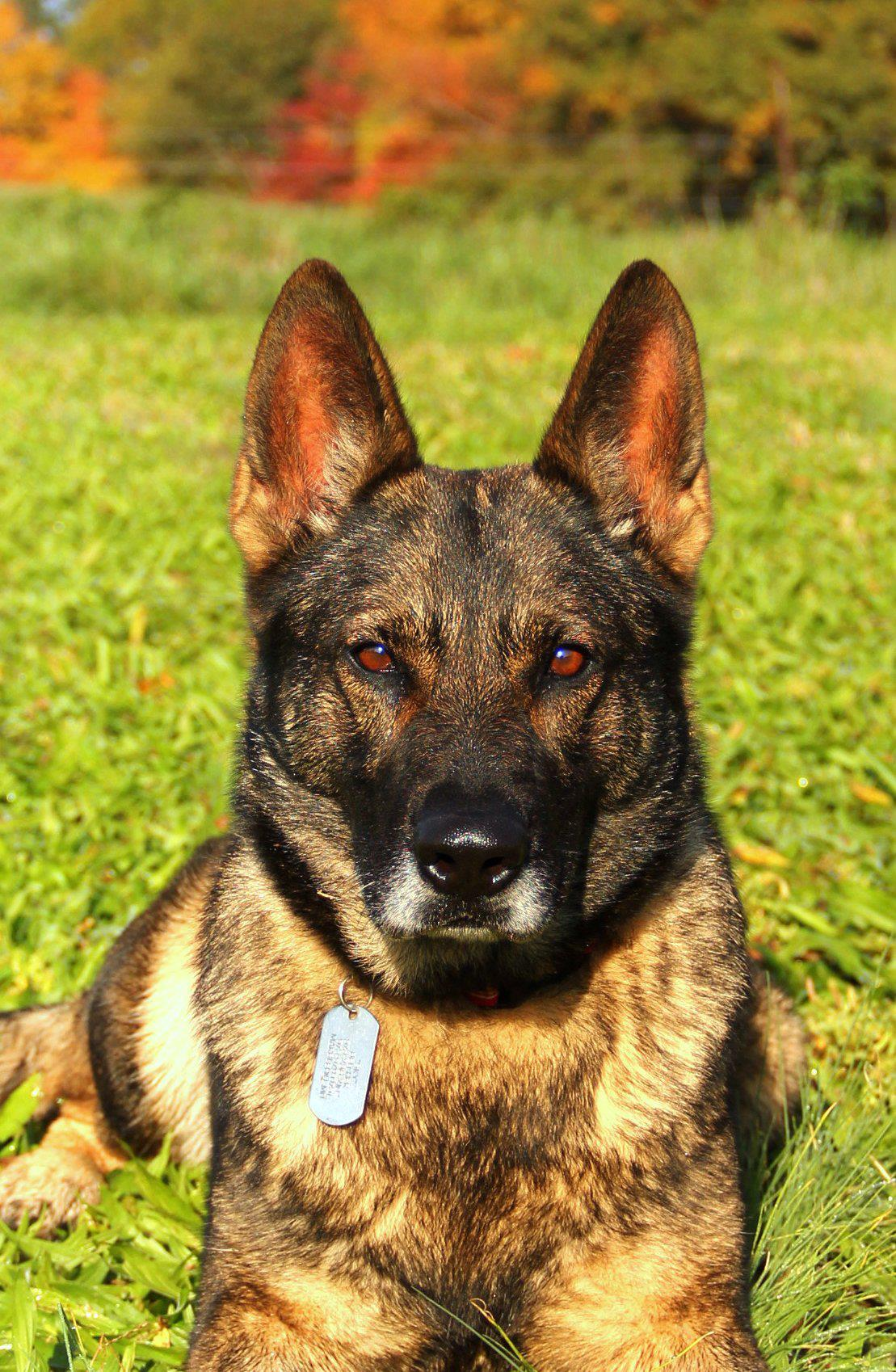PSD Kennels Puppy purchase review