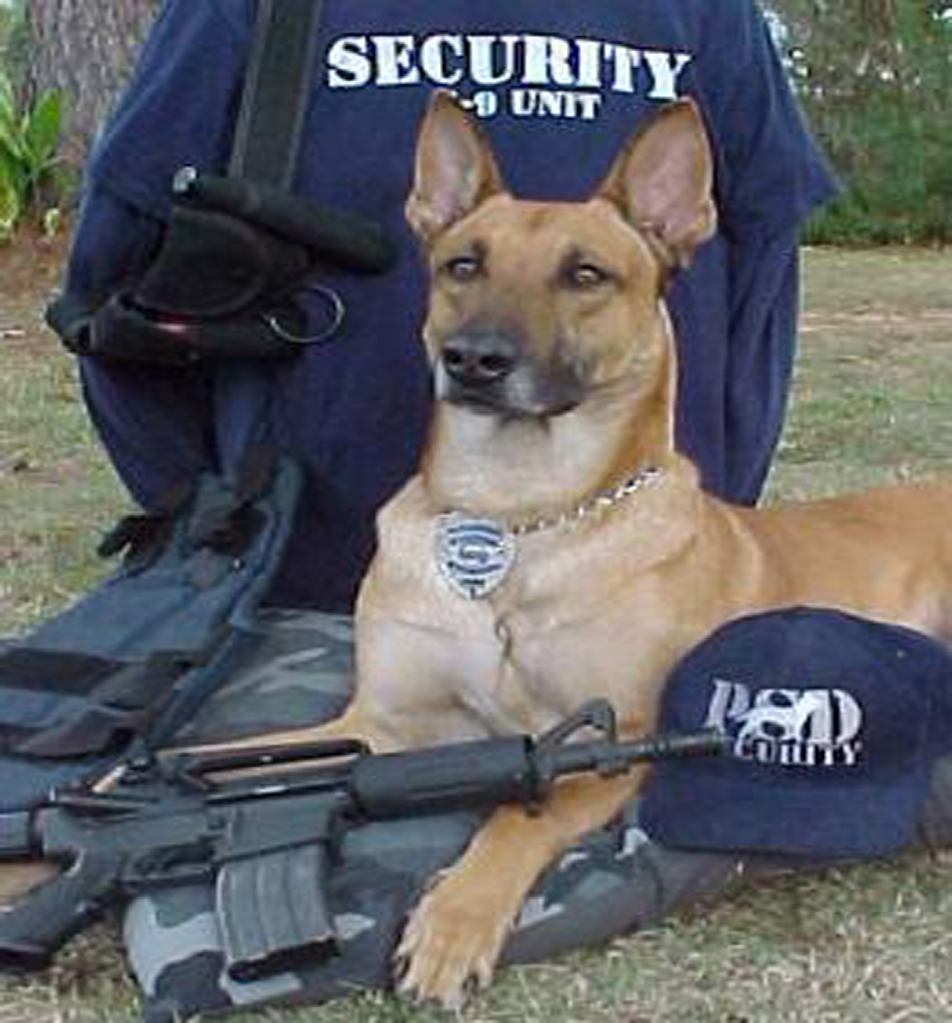 PSD Igor hard at work at a local police station PSD Kennels